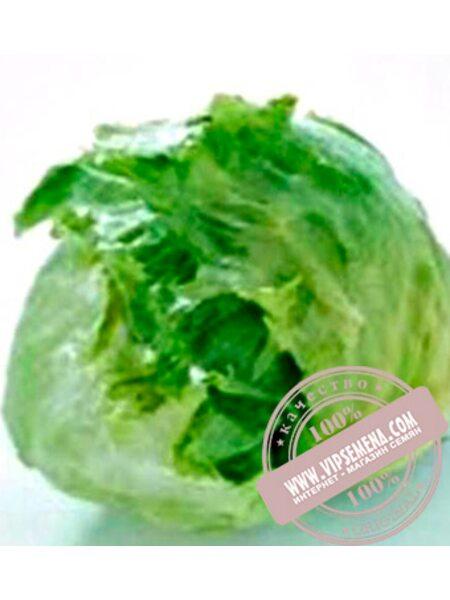 Гондар (Gondar) семена кочанного салата тип Айсберг Nunhems, оригинальная упаковка (5000-семян-драже)