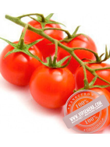 Метро F1 (Metro F1) семена детерминантного черри-томата Nunhems, оригинальная упаковка (1000 семян)