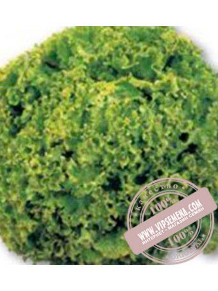 Оникс (Onix) семена листового салата тип Лолло Бионда Nunhems, оригинальная упаковка (5000-семян-драже)