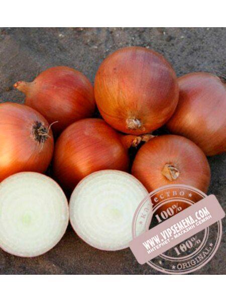 Пандеро F1 (Pandero F1) семена лука репчатого Nunhems, оригинальная упаковка (1 млн-семян)