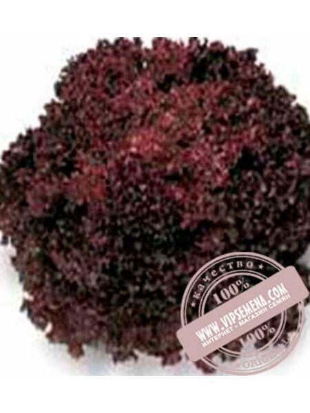 Революция (Revolution) семена листового салата тип Лолло Росса Nunhems, оригинальная упаковка (5000-семян-драже)
