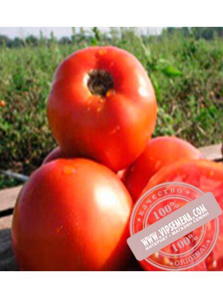 Шеди Леди F1 (Shady Lady F1) семена детерминантного томата Nunhems, оригинальная упаковка (1000 семян)