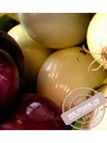 Солcтис F1 (Solstis F1) семена лука репчатого Nunhems, оригинальная упаковка (100000-семян)