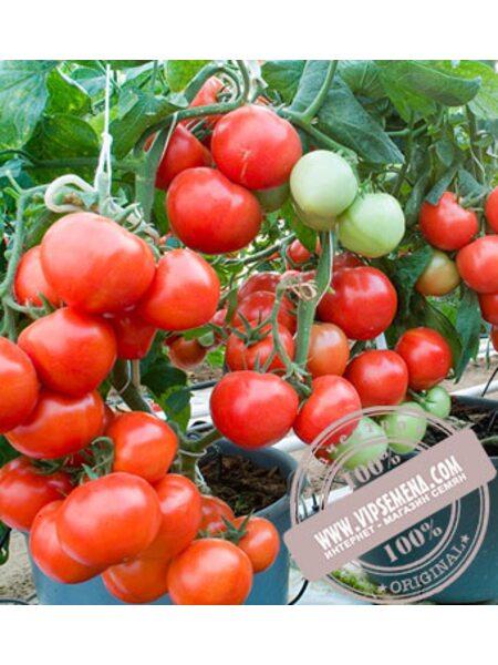 Платус F1 (Platus F1) семена томата полудет. красного Seminis, оригинальная упаковка (500 семян)