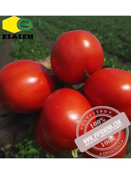 Эдвайзер F1 (Edvaizer F1) семена детерминантного томата Esasem, оригинальная упаковка (1000 семян)