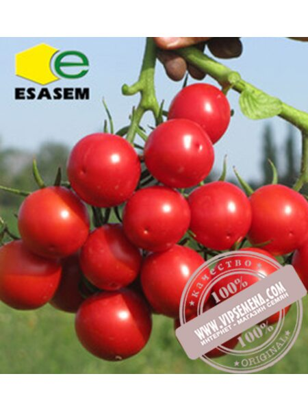 Руфус F1 (Rufus F1) семена детерминантного томата Esasem, оригинальная упаковка (1000 семян)