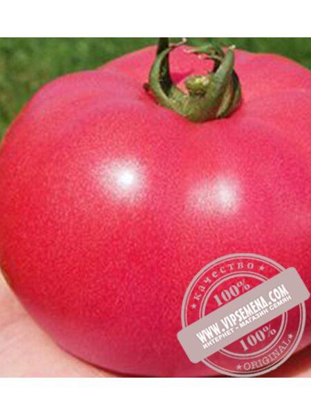 TL 12774 F1 семена индетерминантного томата Esasem, оригинальная упаковка (250 семян)