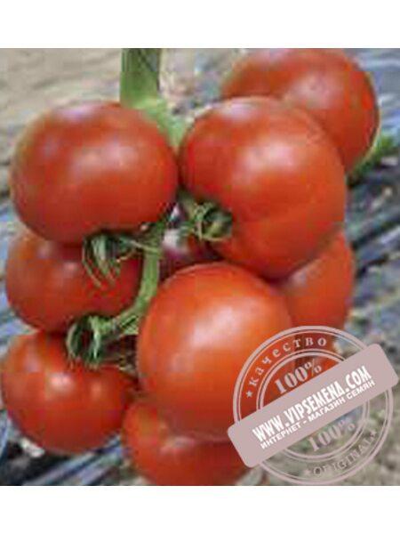 Чероки F1 (Cheroki F1) семена индетерминантного томата Esasem, оригинальная упаковка (500 семян)