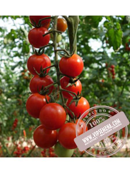 Дольчисио F1 (Dolchisio F1) семена детерминантного томата Esasem, оригинальная упаковка (1000 семян)