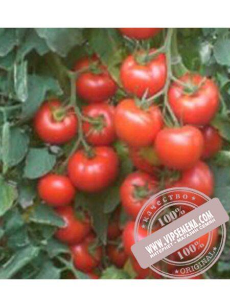 Гелекси F1 (Geleksi F1) семена детерминантного томата Esasem, оригинальная упаковка (1000 семян)