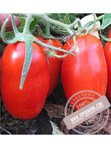 Кальверт F1 (Kalvert F1) семена детерминантного томата Esasem, оригинальная упаковка (1000 семян)