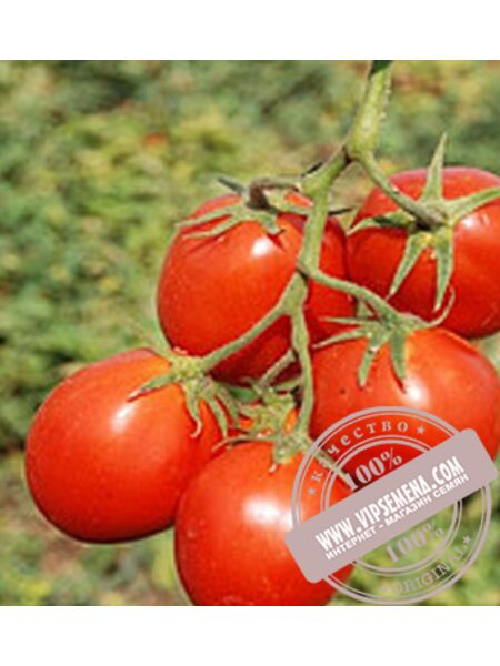 Керо F1 (Kero F1) семена детерминантного томата Esasem, оригинальная упаковка (1000 семян)