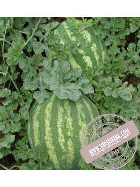 Кримсон Свит (Krimson Svit) семена арбуза Griffaton, оригинальная упаковка (500 гр.)
