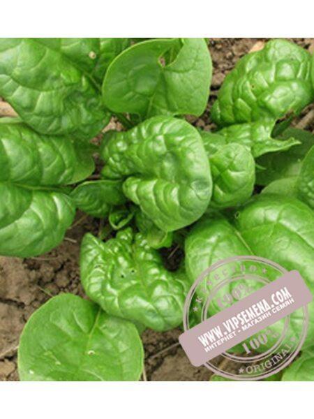 Матадор (Matador) семена шпината Griffaton, оригинальная упаковка (5 кг)
