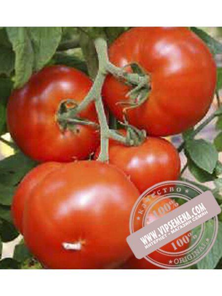 Нада F1 (Nada F1) семена индетерминантного томата Esasem, оригинальная упаковка (250 семян)