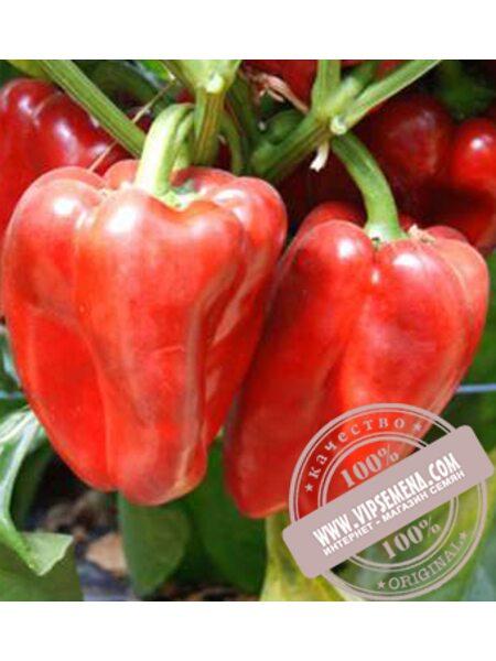 Офанто F1 (Ofanto F1) семена сладкого перца Esasem, оригинальная упаковка (1000 семян)