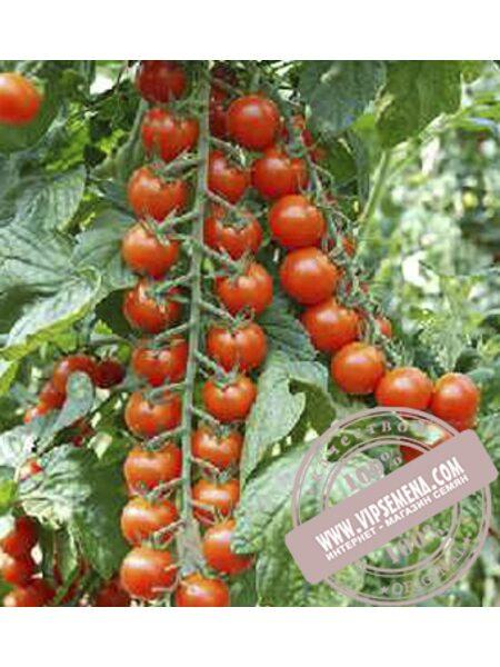 Порпора F1 (Porpora F1) семена индетерминантного томата Esasem, оригинальная упаковка (250 семян)