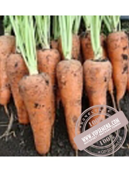 Шантане Рекорд (Shantane Redkor) семена моркови Griffaton, оригинальная упаковка (500 грамм.)
