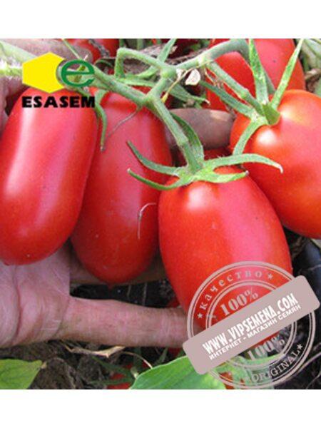 Талент F1 (Talent F1) семена детерминантного томата Esasem, оригинальная упаковка (1000 семян)