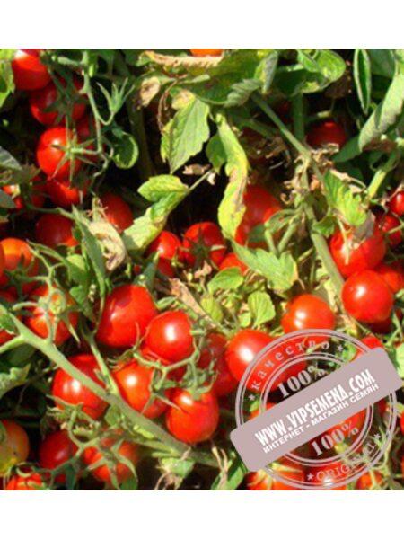 Волле Ред F1 (Volle Red F1) семена детерминантного томата Esasem, оригинальная упаковка (1000 семян)