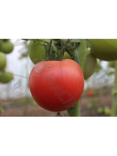 Канна 218 F1 (Kanna 218 F1) семена томата индет. розового Seminis, оригинальная упаковка (500 семян)
