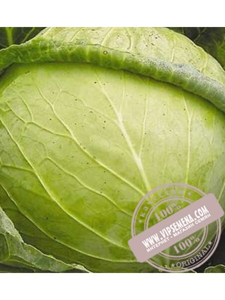 Авак F1 (Avak F1) семена капусты белокочанной Moravoseed, оригинальная упаковка (10000 семян)