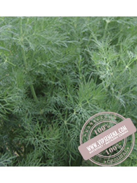 Татран (Tatran) семена укропа Moravoseed, оригинальная упаковка (100 грамм)