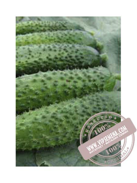 Алице F1 (Alice F1) семена огурца плёлоопыляемого Moravoseed, оригинальная упаковка (50 грамм)
