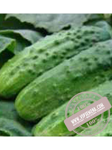 Алтай F1 (Altai F1) семена огурца плёлоопыляемого Moravoseed, оригинальная упаковка (50 грамм)