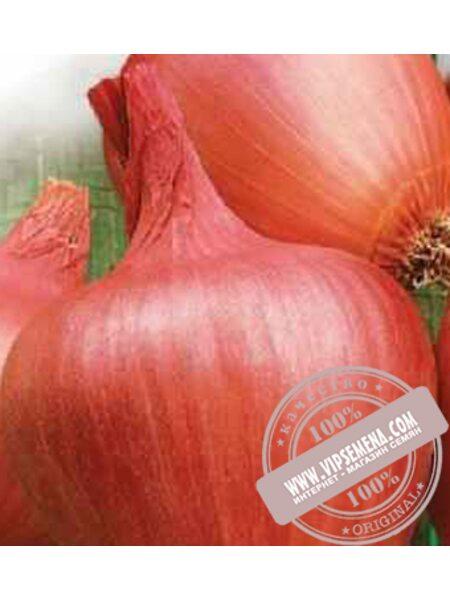 Амфора F1 (Amfora F1) семена репчатого лука Moravoseed, оригинальная упаковка (25000 семян)