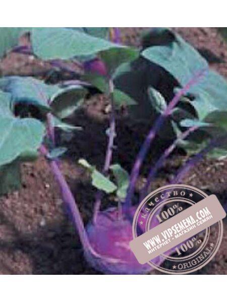 Балот F1 (Balot F1), семена капусты кольраби Moravoseed оригинальная упаковка (2500 семян) раннеспелая