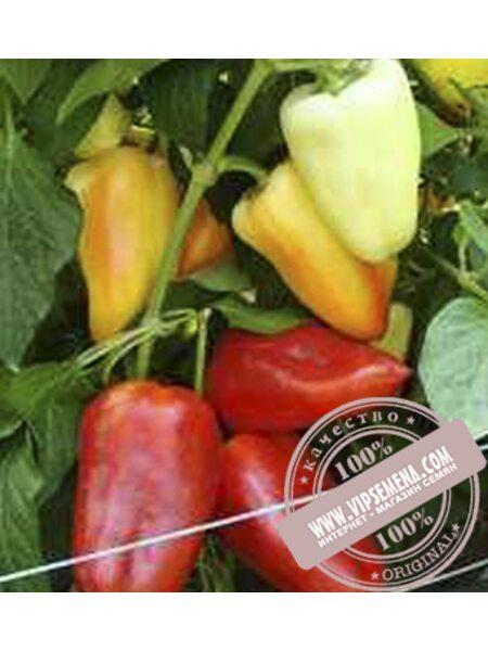 Цинтия F1 (Cuntiya F1) семена перца сладкого Moravoseed, оригинальная упаковка (500 семян)