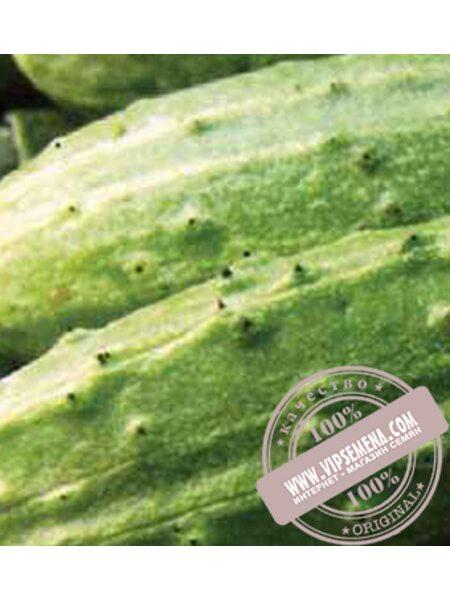 Далила F1 (Dalila F1) семена огурца плёлоопыляемого Moravoseed, оригинальная упаковка (50 грамм)