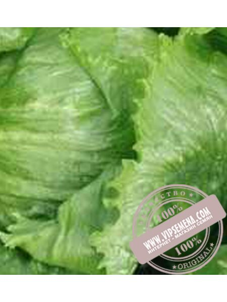 Этти (Etti) семена салата Айсберг Moravoseed, оригинальная упаковка (10000 семян)