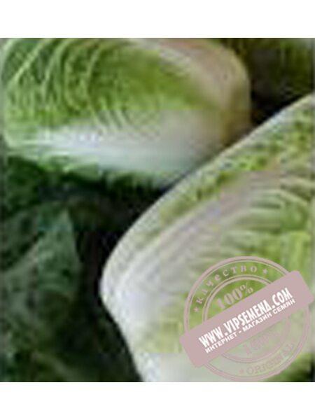 Форко F1 (Forko F1) семена капусты пекинской Moravoseed, оригинальная упаковка (2500 семян)