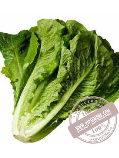 Галандер (Galander) семена салата Ромен Moravoseed, оригинальная упаковка (10000 семян)