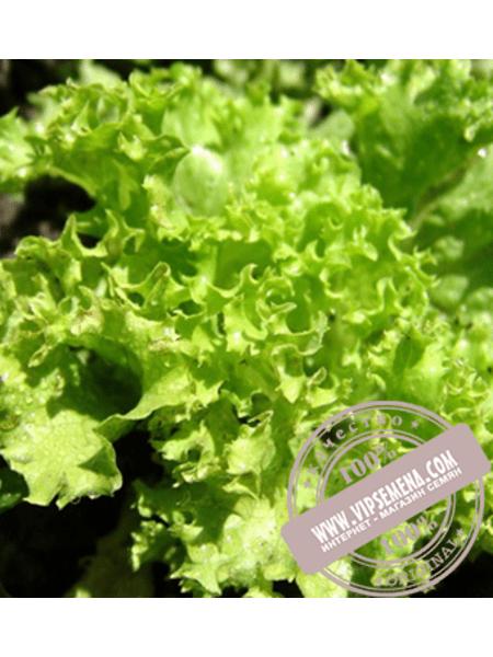 Геркулес (Кутз) (Gerkules) семена салата Батавия Moravoseed, оригинальная упаковка (10000 семян)