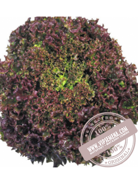 Кримсон (Krimson) семена салата типа Лолло Росса Moravoseed, оригинальная упаковка (5000 семян)