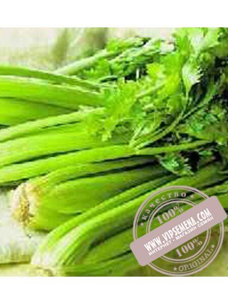 Малахит (Malahit) семена листового сельдерея Moravoseed, оригинальная упаковка (10000 семян)