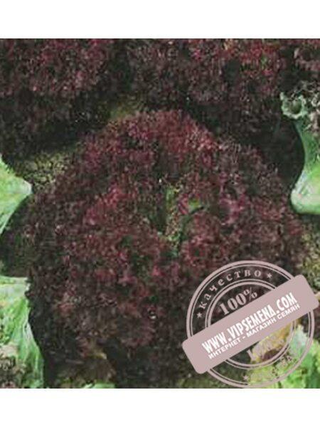 Николай (Nikolaj) семена Дуболистного салата Moravoseed, оригинальная упаковка (10000 семян)