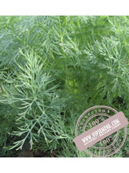 Оливер (Oliver) семена укропа Moravoseed, оригинальная упаковка (100 грамм)