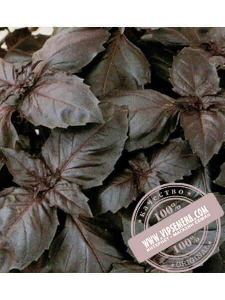 Ред Рубин (Red Rubin) семена базилика Moravoseed, оригинальная упаковка (50 грамм)
