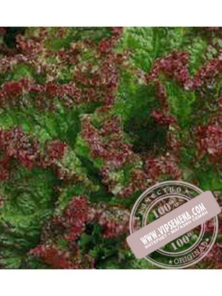 Робин (Robin) семена Дуболистного салата Moravoseed, оригинальная упаковка (10000 семян)