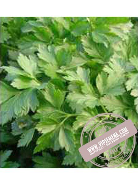 Росава (Rosava) семена корневой петрушки Moravoseed, оригинальная упаковка (100 грамм)