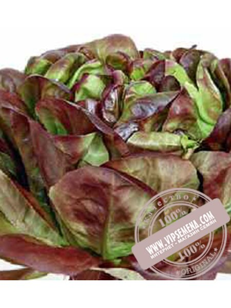 Сагим (Sagim) семена Маслянистого салата Moravoseed, оригинальная упаковка (10000 семян)