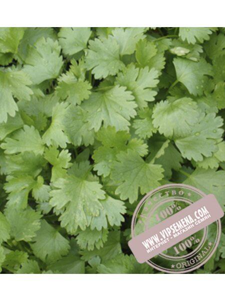 Сноуболт (Snowbolt T) семена кориандра Moravoseed, оригинальная упаковка (500 грамм)