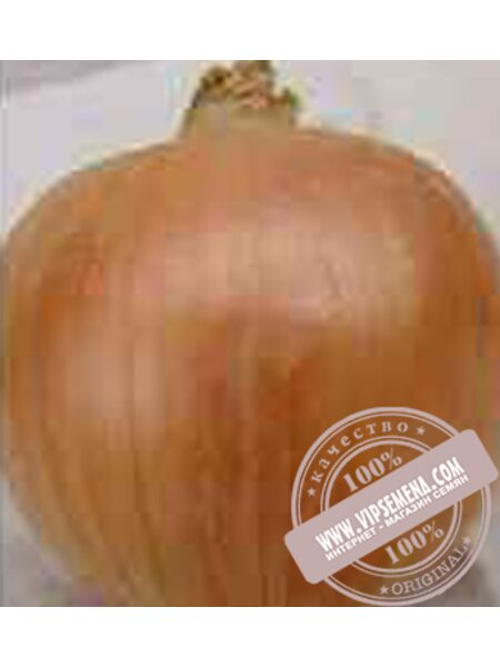 Унико F1 (Uniko F1) семена репчатого лука Moravoseed, оригинальная упаковка (25000 семян)