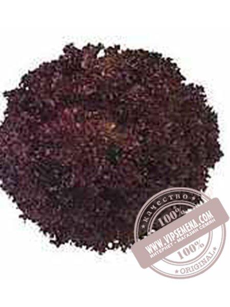 Верала (Verala) семена Дуболистного салата Moravoseed, оригинальная упаковка (10000 семян)