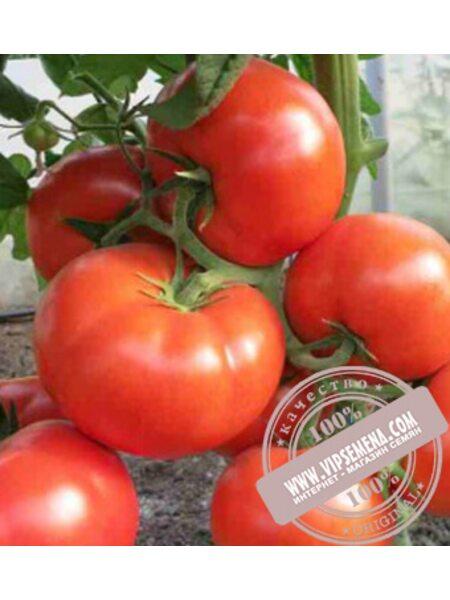 CRX 78503 F1 (CRX 78503 f1)  семена томата индет. красного Cora Seed, оригинальная упаковка (1000семян)