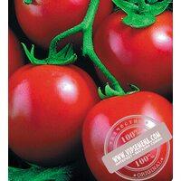 Перфектпил F1 (Perfectpeel) семена томата Seminis, оригинальная упаковка (1000 семян)